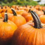 The Pumpkin Patch Group